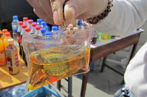 Chinese Vendors Selling Live Fish and Turtles in Plastic Bags as Keychains
