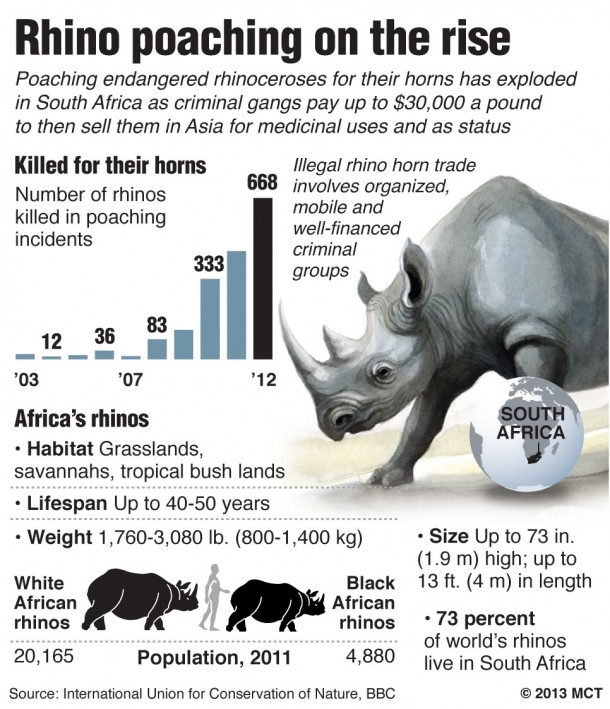 South African rhino poaching increases