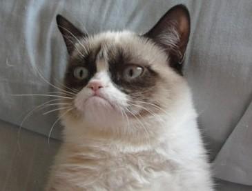 http://d3819ii77zvwic.cloudfront.net/wp-content/uploads/2013/05/Grumpy-Cat.jpg