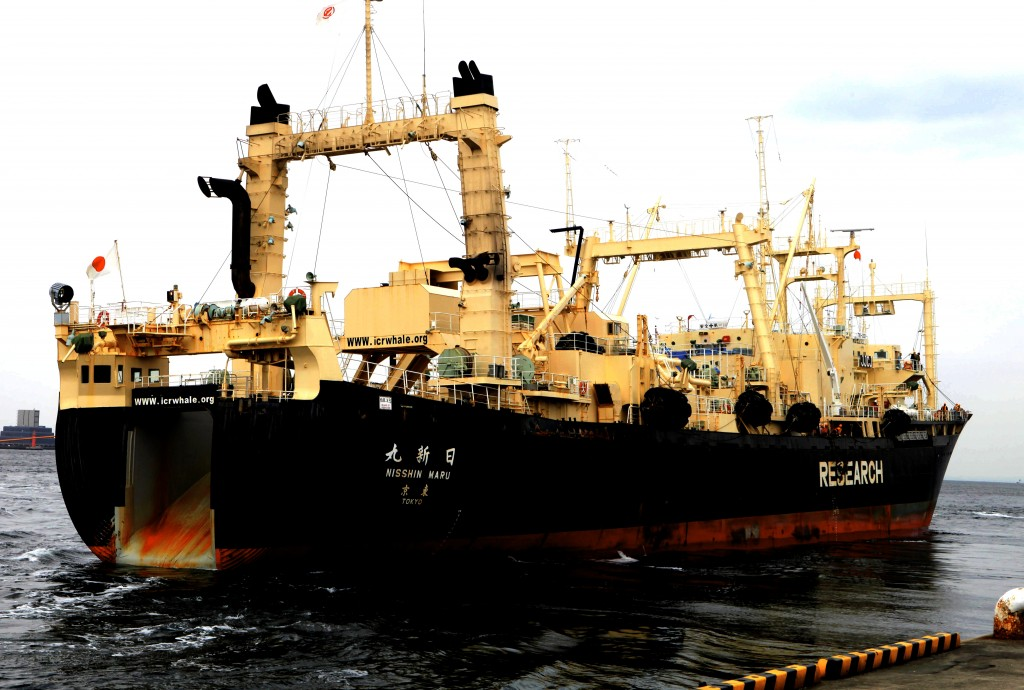 Japan Whaling Controversy 27