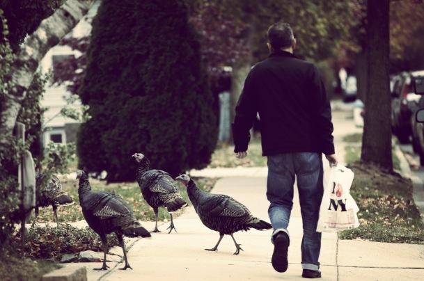 Urban-Turkeys_Darg-1_Fotor.jpg