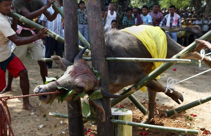 Animal sacrifice in Hinduism