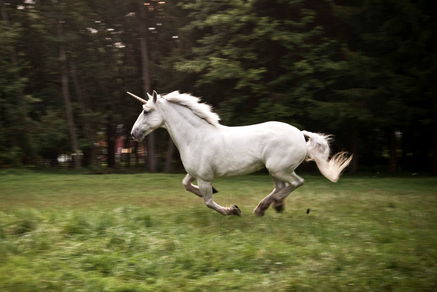 Pin Real-unicorns-found-alive on Pinterest